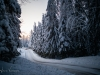 Test_Days_Meeke_WRC_Suède_2019_10